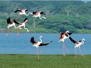 Bundala-national-park-