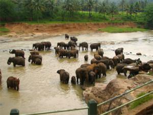 Elephant_Orphanage