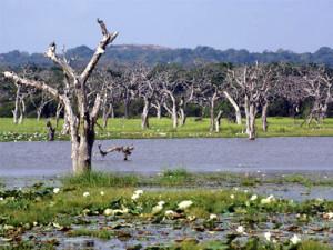 Yala-National-Park-Watery-