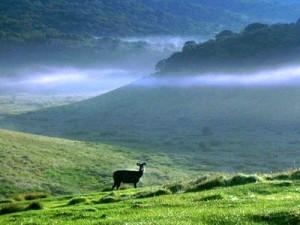 invite-to-paradise-sri-lanka-holidays-honeymoons-horton-plains-worlds-end-1